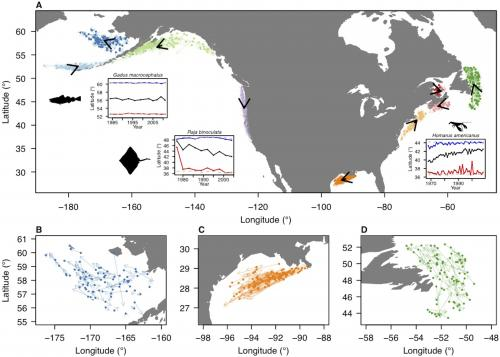 Movement of marine life follows speed and direction of climate change