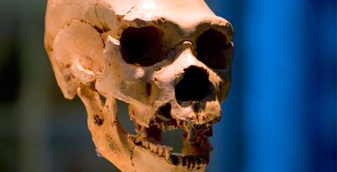 Neanderthals may have made a meal of animal stomachs