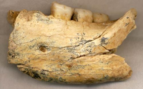 New look at human fossil suggests Eastern Europe was an important pathway in evolution