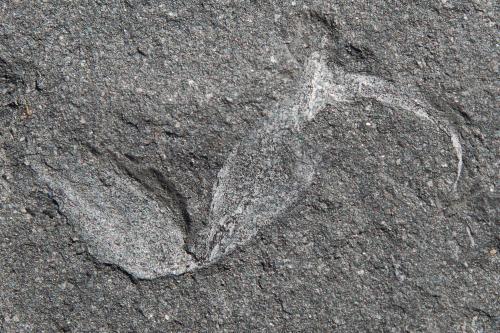 La coda dello Scorpione. Credit: Wits University