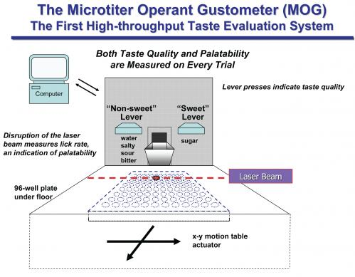 Opertech Bio researchers develop method for high-throughput taste evaluation