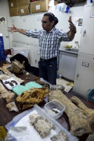 Paleontologist Ascanio Rincon shows bones of phehistoric animals found in Venezuela, in Caracas on August, 30, 2013