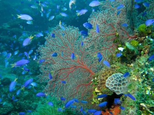 Parasites: Rulers of the Reef