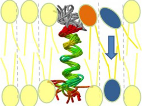 Pathway for membrane building blocks