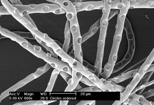 Patterns on extremely small fibres: Study pushes regenerative medicine another step forward