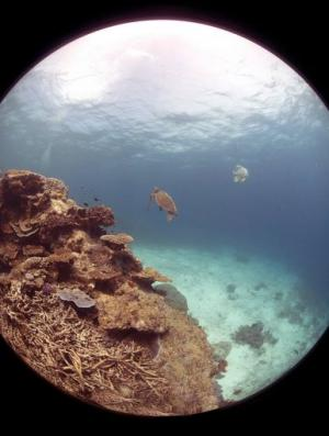 Photo from an underwater camera used to map the iconic Great Barrier Reef, March 1, 2012