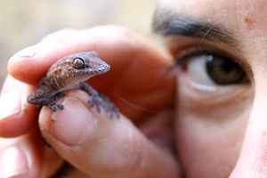 Pilbara gecko genetics shaped by geographical processes