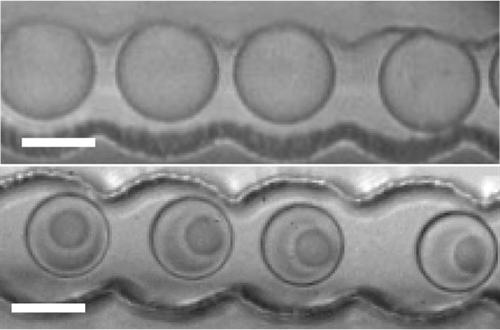 Protocells formed in salt solution--closer to synthetic life than anyone