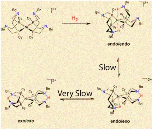 Размещение протонов в нужном месте катализатора делает его более эффективным