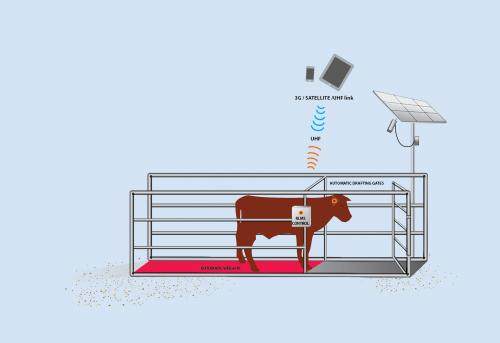 Remote livestock management system of the future