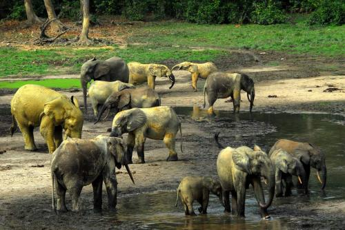Reports from the Central African Republic indicate security has returned to Dzanga-Sangha National Park