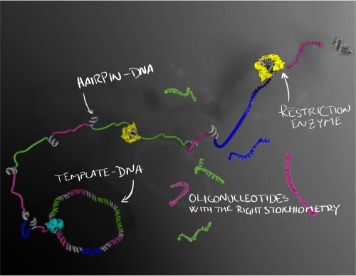 New method for mass-producing high-quality DNA molecules