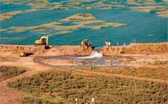Salt marsh restoration could bring carbon benefits