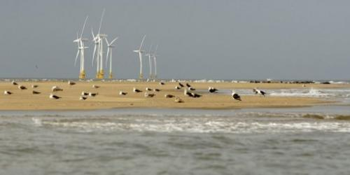 Seals rest near Scroby Sands wind farm off the coast of Norfolk, England, on August 27, 2008