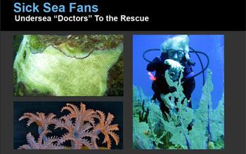 Sick Sea Fans: Undersea