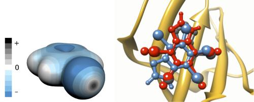 Small change for a big improvement: Halogen bonds and drug discovery