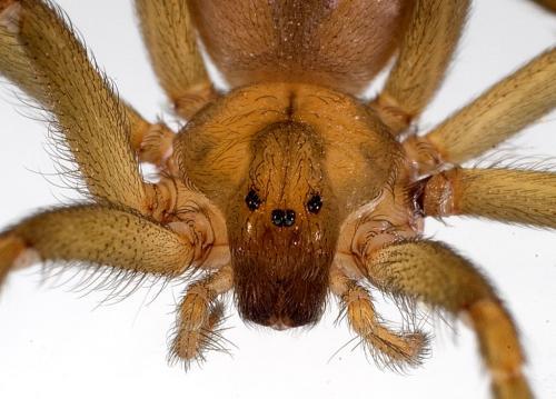 Spider venom reveals new secret