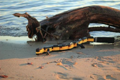 Salamandra robotica II, the only robot able to swim, crawl and walk