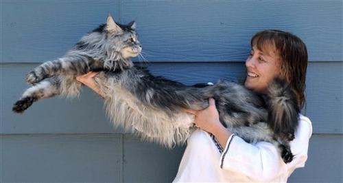 Stewie the world's longest cat dies in Nevada