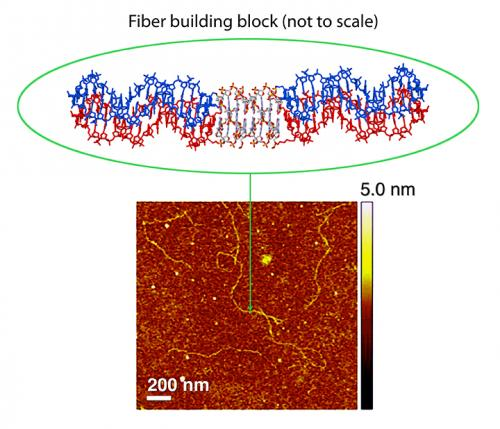 Stiffening the backbone of DNA nanofibers