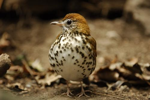 Study shows exurban residences impact bird communities up to 200 meters away