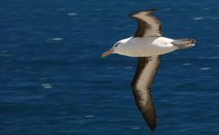 Study uncovers albatross fishing grounds