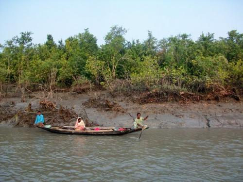Bengali forests are fading away