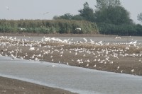Targeted action needed to protect waterbirds
