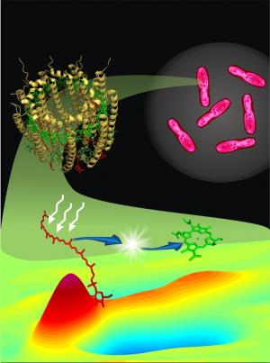 Team provides new insight into photosynthesis