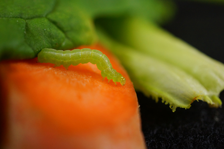 Знает ли ваш салат, который час
