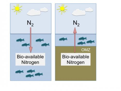 The nitrogen puzzle in the oceans