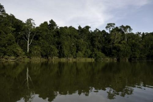 The Yasuni National Park in Orellana province in Ecuador is pictured on November 10, 2012