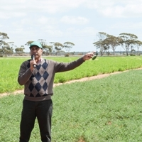 Tough new varieties set to revive profitable chickpea industry