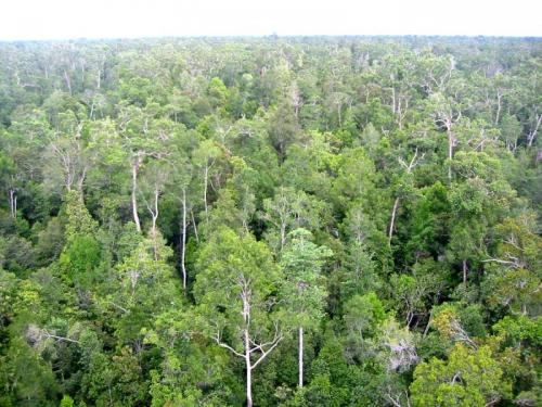 Tropical ecosystems regulate variations in Earth's carbon dioxide levels