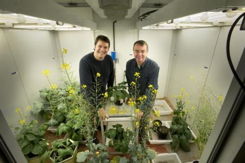 Бифункциональный фермент для производства алканового биотоплива