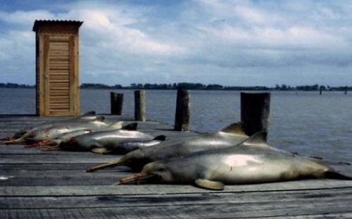 Undated handout picture of dead La Plata dolphins
