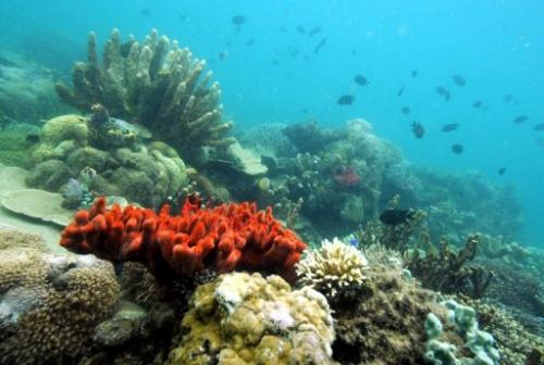 Various kinds of corals grow in the marine protected area of Honda Bay located in Puerto Princesa on October 27, 2008