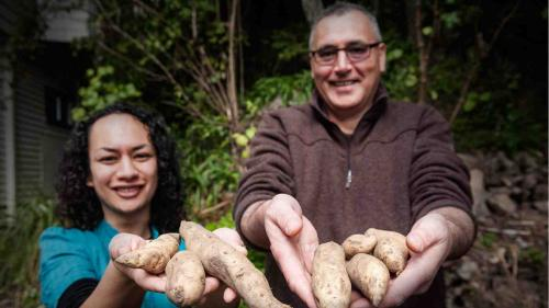 Victoria University recreates traditional Māori vegetable garden