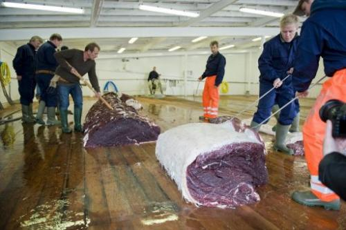 Whalers inspect meat from a 35-tonne fin whale on June 19, 2009, one of two caught off the coast of Iceland