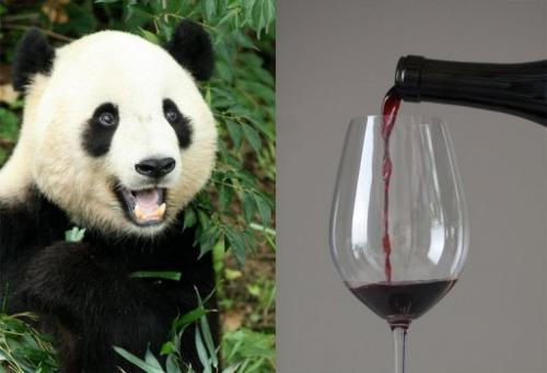 Which is more important, pandas or pinot?