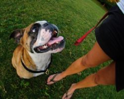 Why breed specific legislation does not protect the public from dangerous dogs