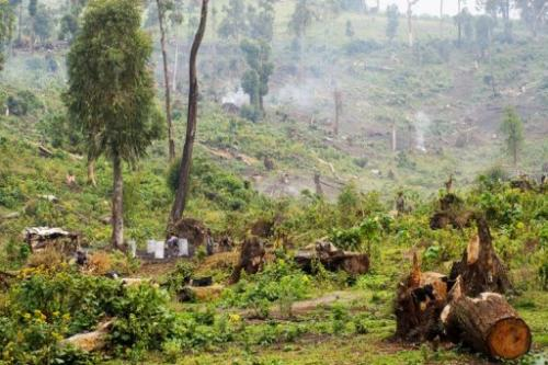 Women produce charcoal by cutting down woodland in Masisi near Kitchanga in North Kivu province on July 16, 2012