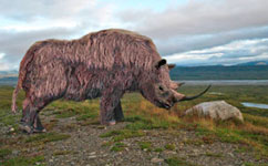 Woolly Rhino shows Britain was once a freezing tundra