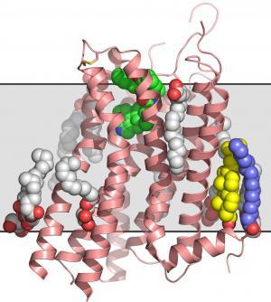 Scientists decode serotonin receptor at room temperature