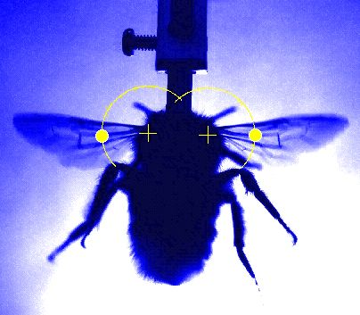 Research duo use X-rays and high speed camera to learn secrets of rapid wing beats of insects