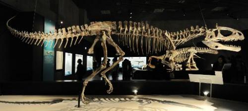 "A file picture taken on March 13, 2009 shows the skeleton of a Cryolophosaurus Ellioti, diplayed at the exhibition ""Dinosau"