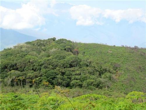 Ants plant tomorrow's rainforest