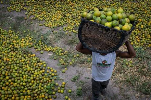 A worker carries a basket of oranges in Rio Real, Brazil, on February 18, 2014