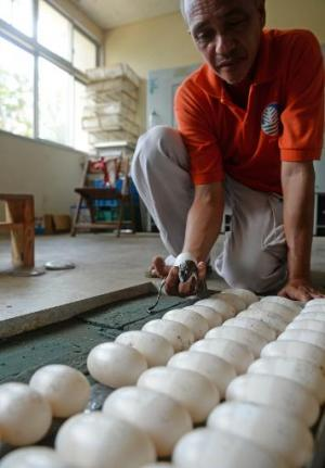 A worker holds a newly-hatched freshwater crocodile next to eggs in incubators ready for hatching at a crocodile farm in Puerto