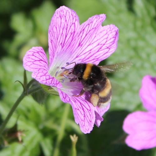 Bees able to spot which flowers offer best rewards before landing
